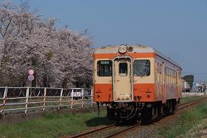 キハ205と桜(4/8)